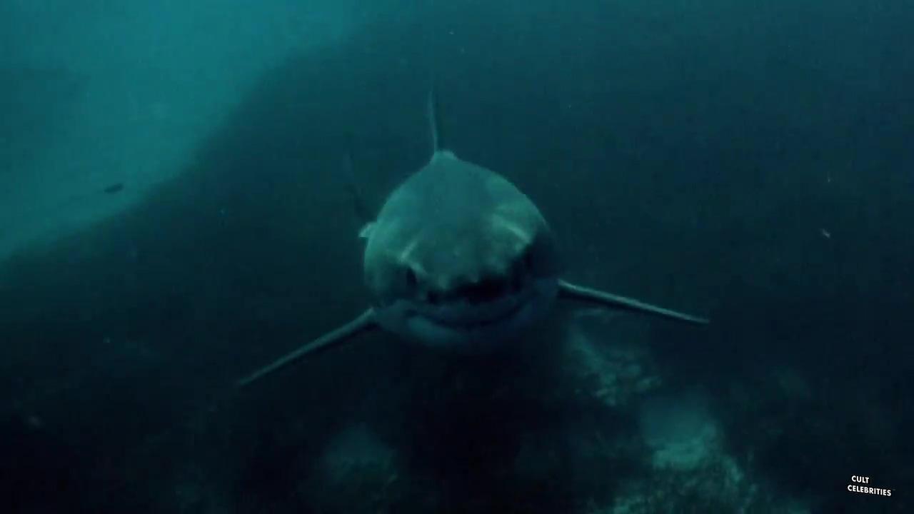 Shark in Venice (2008)